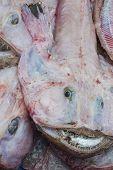 ������, ������: Devil Fish