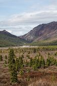 picture of denali national park  - View of fields and mountains in Denali National Park in spring - JPG