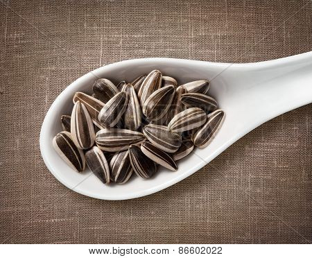 Sunflower Seeds In White Porcelain Spoon / High-res Photo Of Grain In White Porcelain Spoon On Burla