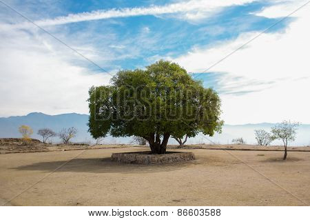 Mexico Oaxaca Monte Alban Lonely Tree And Sky