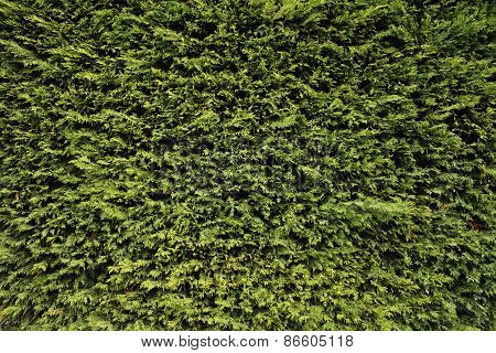 Green plant texture