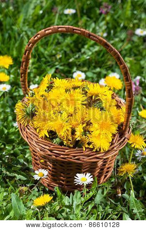 Dandelion Flower Basket