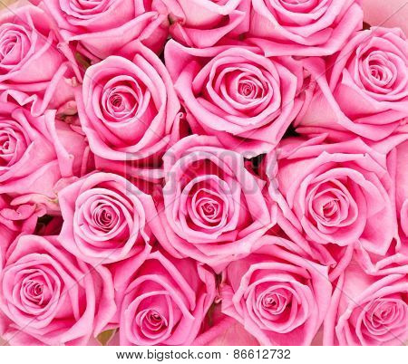 Valentines day background with pink roses closeup