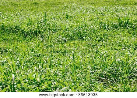 Green Grass Meadow Background