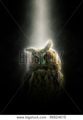 Perched horned owl lit from above by a beam of light shining directly onto its head through the darkness illuminating it in a white glow, conceptual artistic image