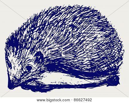 Hedgehog animal