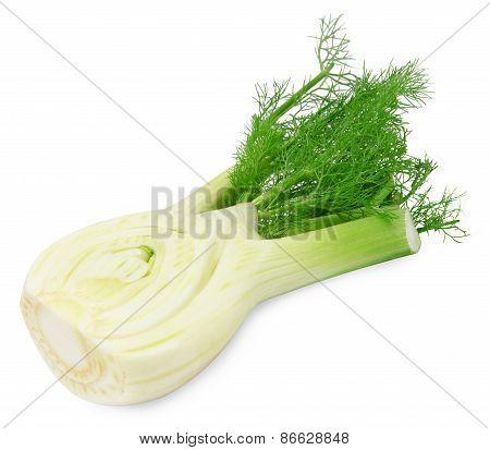Fresh cutted fennel