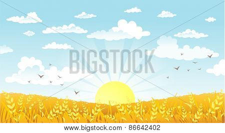 Vector illustration of beautiful landscape. Rural scene with yellow field on a sunny morning