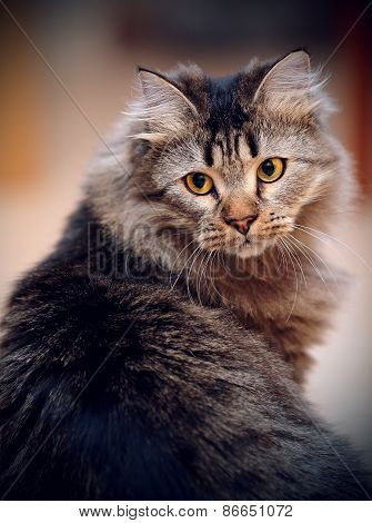 Portrait Of A Fluffy Striped Domestic Cat.