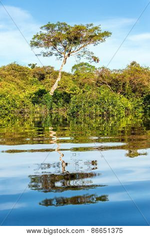 Jungle Reflection In Amazon