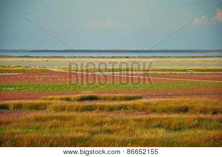 Old salt marsh