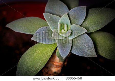 nice green plant - macro closeup photo
