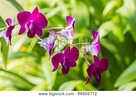 Beautiful Purple Orchid Flower Tropical Plants.