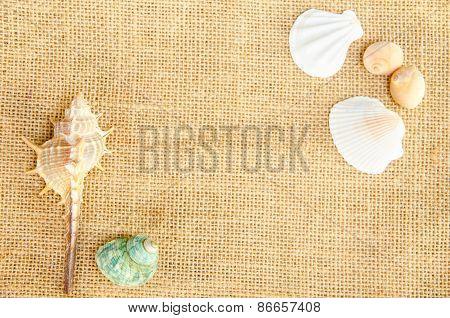 Shells On Sack Background.