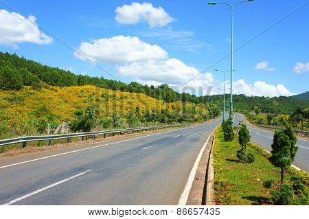 Dalat Highway, Pine Forest
