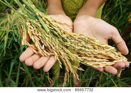 World Food Security, Famine, Asia Rice Field