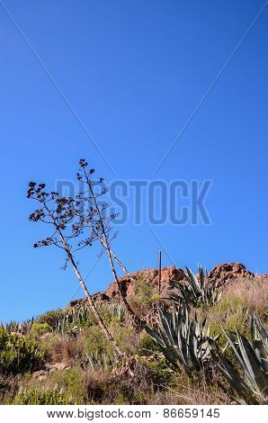 Green Agave Plant Cactus