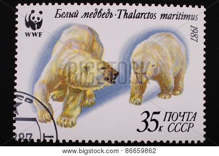 Moscow, Ussr- Circa 1987: Postage Stamp Printed Mail Ussr Shows Image Of Two Polar Bears