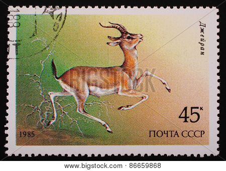 Moscow, Ussr-circa 1985: Postage Stamp Printed Mail Ussr Shows Image Of A Wild Animal Gazelle