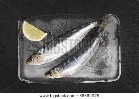 Fresh Anchovy Fish On Ice.