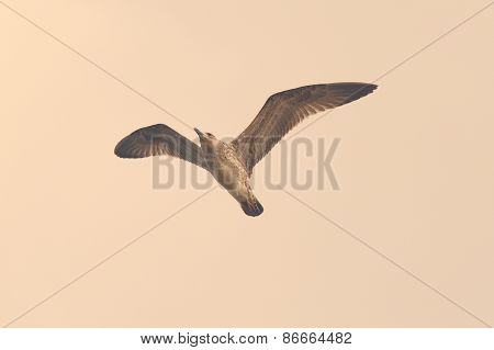 Vintage Style Image Of A Gull
