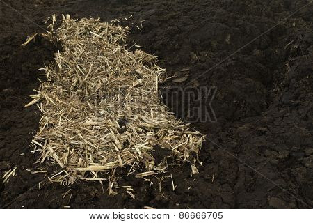 Cow manure with straw background