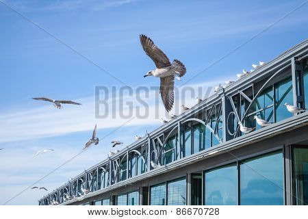 Seagulls Flying In Sky Near The Pier Building
