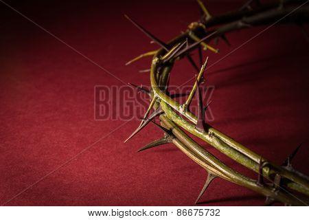 Closeup Crown Of Thorns