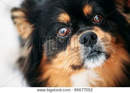 Black And Brown Colors Dog Close Portrait