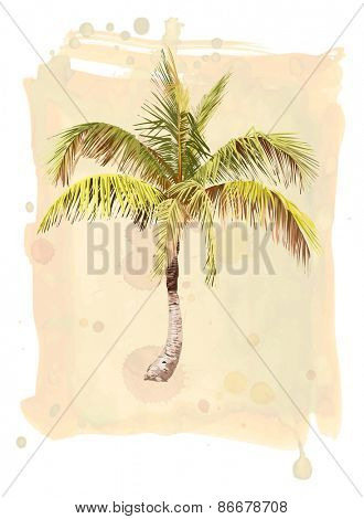 Palm Tree. Watercolor illustration.