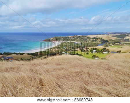 An australian landscape with yellow grasses