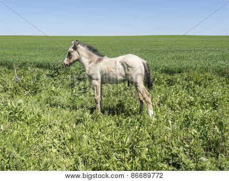 Free Foal In The Field