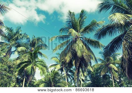 Coconut Palm Trees Over Cloudy Sky Background