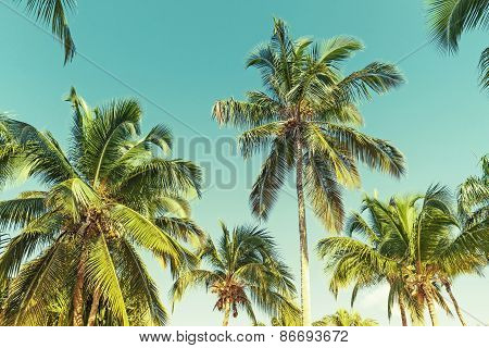 Coconut Palm Trees Over Sky Background. Vintage Style