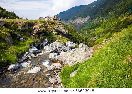 Forest stream surrounded by vegetation