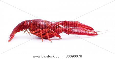Food. Delicious crayfish on a white background