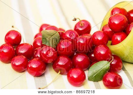Organic Cherries in a Bowl