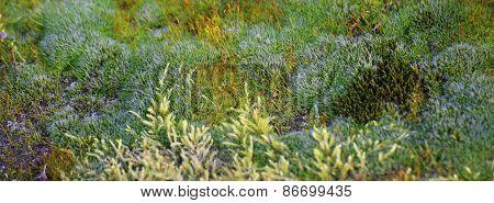 Moss Species