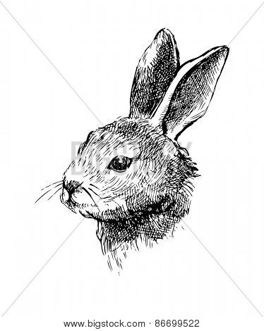 Hand drawn vector rabbit