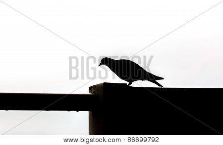 Silhouette Of A Bird Walk On Wall