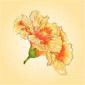 stock photo of hibiscus  - Tropical flowers yellow hibiscus tropical flowers blossom simple  vector illustration - JPG