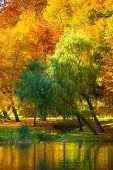 foto of orange-tree  - Natural landscape - JPG