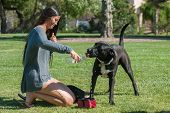 stock photo of playtime  - Girl hydrating her dog before playtime resumes. ** Note: Visible grain at 100%, best at smaller sizes - JPG