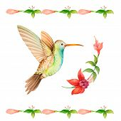 stock photo of hummingbirds  - Hummingbird flying over a flower fuchsia watercolor vector illustration - JPG