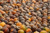 stock photo of ground nut  - A lot of betel nut on cement ground - JPG