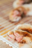 pic of orange kitten  - Close Up Paw Pads Of Peaceful Orange Red Cat Kitten