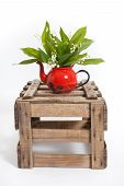 image of wooden crate  - Lilies of the valley in a wooden crate - JPG