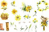 image of sunflower  - Composition of yellow sunflower painted in watercolor for your design - JPG