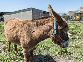 picture of donkey  - Donkey in the field - JPG