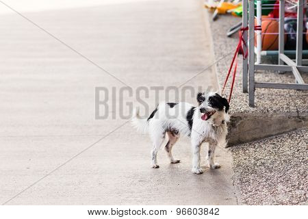 Cute dog waiting patiently